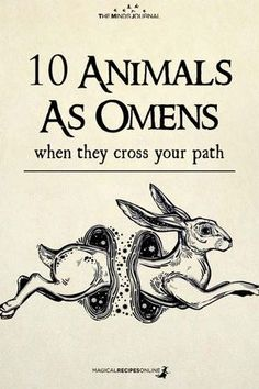 10 Animals as Omens when they cross your path. See what it means when this animal appears in your life. Animal Meanings, Animal Symbolism, Pseudo Science, Animal Spirit Guides, Baby Witch, Wiccan Spells, Green Witchcraft, Modern Witch, Practical Magic