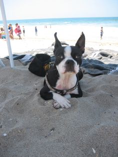At the beach   THIS WOULD BE CAPTAIN.....HE'D LOVE THE BEACH!!!