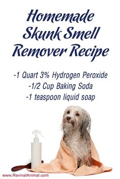 Simple homemade skunk smell remover recipe for dogs & cats.