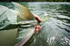 Getting the Hero Shot When You're fishing Solo | Fly Fishing | Gink and Gasoline | How to Fly Fish | Trout Fishing | Fly Tying | Fly Fishing Blog