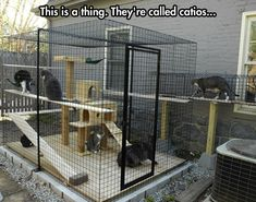 "Cat cage in the back yard, but you need to have one ""room"" with a rain-proof roof for the litter box, so you don't have to smell it in the house."