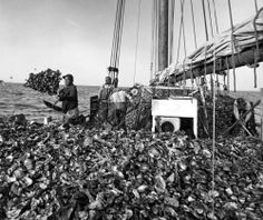 In 1943, a skipjack, a sloop-rigged sailboat, dredges the Chesapeake Bay for oysters. The boat started replacing the bugeye as the choice for harvesting oysters in the late 19th century because the skipjack was cheaper and smaller.