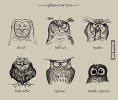 The wonderful world of coffee explained by owls