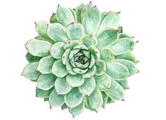 how to paint a succulent