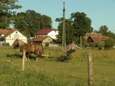 hartes aber zufriedenes Leben in der Nähe von Marksewo, Mazury/Polska