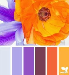 Purple and orange flowers. Love this color combo!