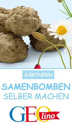 So macht ihr Samenbomben selbst Throw the Seedbombs on small pieces of soil and watch how colorful flowers grow there … The instructions are at GEOlino! Mini Terrarium, How To Make Terrariums, Terrarium Plants, Succulent Terrarium, Planting Seeds, Planting Succulents, Planting Flowers, Growing Herbs, Growing Flowers