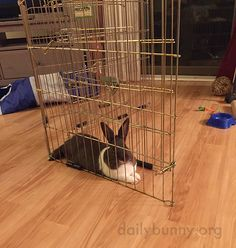 Bunny, usually we set up the pen before you get inside it - July 19, 2015