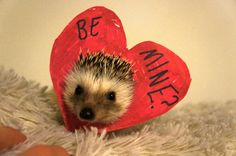 If any guy wants to go out on a date with me I will definitely say yes if you do it like this. (And let me keep the hedgehog)