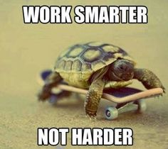 #turtles #workhard #awesome #Pets #Obsessions #WriteOn #LOL #Summer #Love