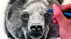 How to Draw a Bear- LethalChris Drawing, Youtube.