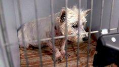 Она 12 лет рожала щенков бездушному хозяину