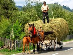 This is Romania! Forest Village, Agriculture, Site History, Republic Of Macedonia, Beautiful Forest, Bucharest, Bosnia, Eastern Europe, Bulgaria