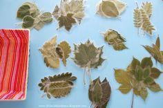 Laminowane liście - materiał edukacyjny dla dzieci