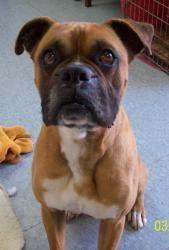 Homeward Bound Dog Rescue Albany