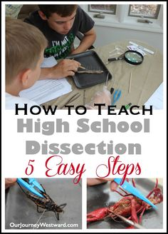 Teaching science high school - How To Teach High School Dissection in the Homeschool – Teaching science high school Biology Lessons, Science Biology, Teaching Biology, Science Lessons, Life Science, Forensic Science, Physical Science, Science Experiments, Ag Science