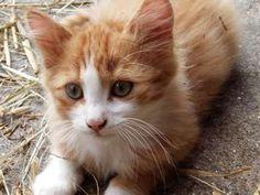 Zu verkaufen 25136085 Animals, Animales, Animaux, Animal, Animais
