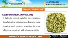 - (Holarrhena Antidysenterica) is useful to the chronic which is associated with ulcerative colitis. This herb helps to the ama (toxins) thus provides the relief in the rectal bleeding, inflammation of colon and Foeniculum Vulgare, Toxic Foods, Ulcerative Colitis, Best Diet Plan, Abdominal Pain, Holistic Healing, Herbal Remedies, Ayurveda