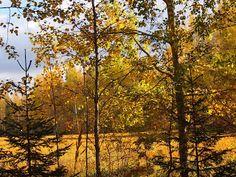 luonto kuvat ja kortit:   Syksy on menossa pitkään ruskea puiden oksat aur...