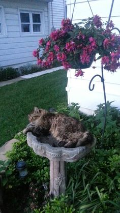 Found this guy lounging in our bird bath   http://ift.tt/1t02vFK via /r/cats http://ift.tt/1VubD00  cats funny pictures