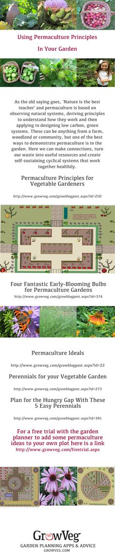 Permaculture is based on observing natural systems and by mimicking them in a garden situation.By incorporating permaculture into your own vegetable garden you will increase its efficiency, help reduce the size of your carbon footprint and promote sustainability: This promotes a blend of organic harmony where companion planting flourishes, perennial vegetables and fruits thrive and annuals are sustained by a holistic approach to soil management, bringing the natural world to your back yard.