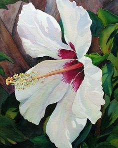 Judy Mercer - White Hibiscus Watercolor  Floral Art