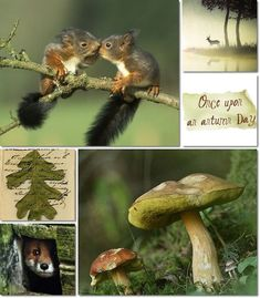 Autumn by Audrey T Collages, Flora Und Fauna, Color Collage, Mood Colors, Beautiful Collage, Months In A Year, Autumn Leaves, Autumn Fall, Shades Of Green