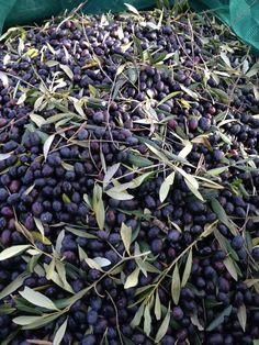Sempre #Olive