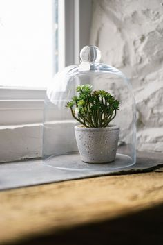 Cute plants in glass cloches