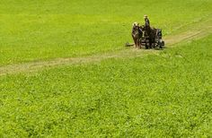 """""""The Amish Farmers Reinventing Organic Agriculture: By studying the immune systems of plants, they've developed a technique that eliminates the need for chemicals.[..] OCT 6 2014 - The Atlantic"""""""