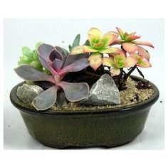 Succulents: the perfect dorm plant- they are EXTREMELY hard to kill or under-water! @amazon.com