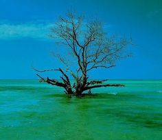 Tree in the sea