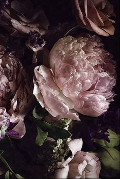 Dark Watercolor Peony Wallpaper Removable Large Scale Floral Wall Mural Pink Lilac Blossoms Self-adhesive Wall Art Venta especial Dark Watercolor Peony Wallpaper extraíble a Flores Wallpaper, Paper Wallpaper, Wall Wallpaper, Mural Floral, Floral Wall, Lilac Blossom, Wall Murals, Wall Art, Harry Styles Wallpaper