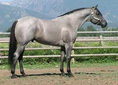 Snips Silver - Foundation Bloodline Quarter horse Stallions Stud Service Breeding