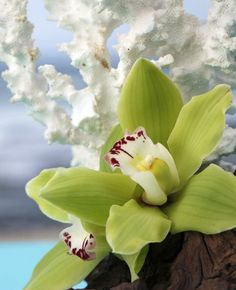 Elegant and exotic, Hawaiian orchids are every bit as beautiful as the habitat they grow in.