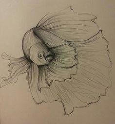 15 Fantastiche Immagini Su My Draw Bugs Jellyfish E Liberia