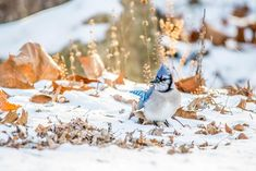 To Help Birds This Winter, Go Easy on Fall Yard Work - A manicured lawn might look nice, but messy is better for birds and bugs. Flowers Perennials, Planting Flowers, Winter Haven, Touch Up Paint, Flowering Shrubs, Black Eyed Susan, Photography Awards, Cool Plants, Bird Species