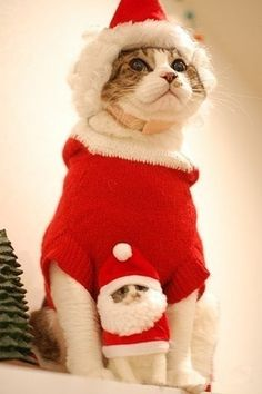 What would Christmas be without our favorite furry family members? Cats definitely make the season bright, so share the kitty Yuletide love. I Love Cats, Cute Cats, Funny Cats, Christmas Kitten, Christmas Animals, Merry Christmas, Crazy Cat Lady, Crazy Cats, Costume Chat