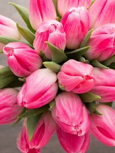 Pink Tulips, Tulips Flowers, Flowers Garden, Planting Flowers, Bright Flowers, Fresh Flowers, Beautiful Flowers, Hydrangea Wallpaper, Flower Wallpaper