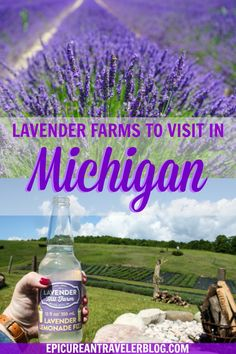 Want to see beautiful lavender fields? Visit these eight lavender farms in Michigan, USA. #PureMichigan #lavender #agritourism #lavenderfields #lavenderfarms #Michigan #MidwestTravel #UStravel