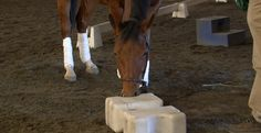 Avoid spooking and refusals - Epona.tv