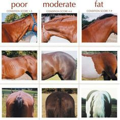 I know someone who needs to look at this & realize they are hurting their horses, not helping them by having SO MANY