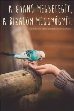 Stunning - Little Birds Book? Cute Birds, Pretty Birds, Beautiful Birds, Animals Beautiful, Budgie Parakeet, Budgies, Parrots, Blue Budgie, Blue Parakeet