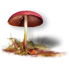 Яндекс.Фотки ❤ liked on Polyvore featuring mushrooms