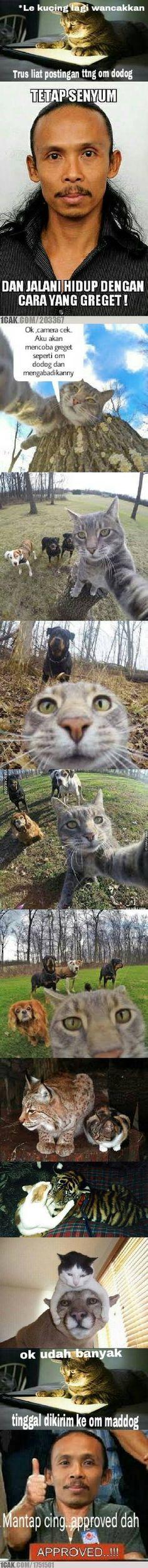 Le kucing : HIDUP SEPERTI OM DODOG... #longpost ??