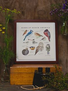 Birds of North America Print, $28, Fawn & Forest