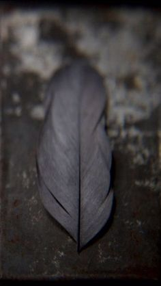 Gray Feather Meaning: Gray feathers are a call to return to peace within to create it without. Gray is also neutral, and can be a sign that the answer to your question is not yes/no or black/white. Life is hectic and peace is coming soon!