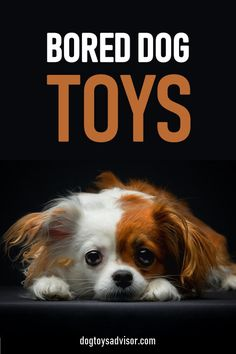 Is your dog bored? Relieve dog boredom by giving your dog more mental stimulation and toys to keep them busy for hours! Check out our top 10 best dog toys Best Dog Toys, Best Dogs, Toy Puppies, Dogs And Puppies, Toys For Bored Dogs, Dog Toys For Boredom, Dogs Funny Husky, Dog Gadgets, Clever Dog