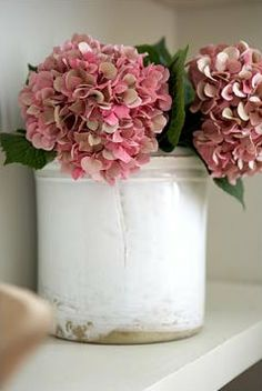 pink hydrangea blooms
