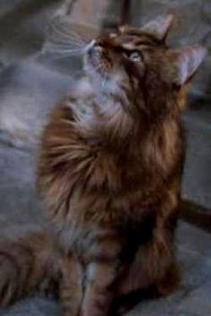 Mrs Norris (fl. 1991 - 1998) is the pet cat of Argus Filch, the caretaker of Hogwarts School of Witchcraft and Wizardry. Mrs Norris is described as having an unusually strong connection with her master, alerting him to any students misbehaving inside the school grounds.